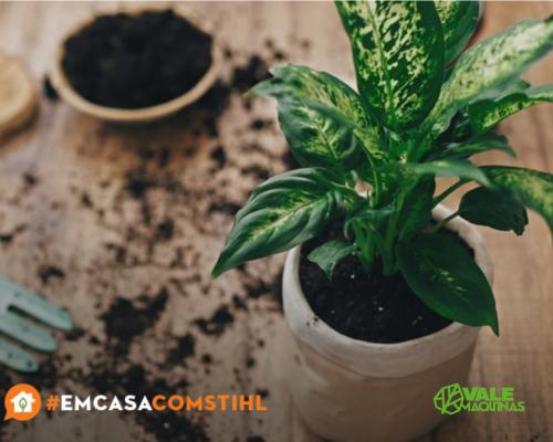 Como plantar em vasos sem furos?